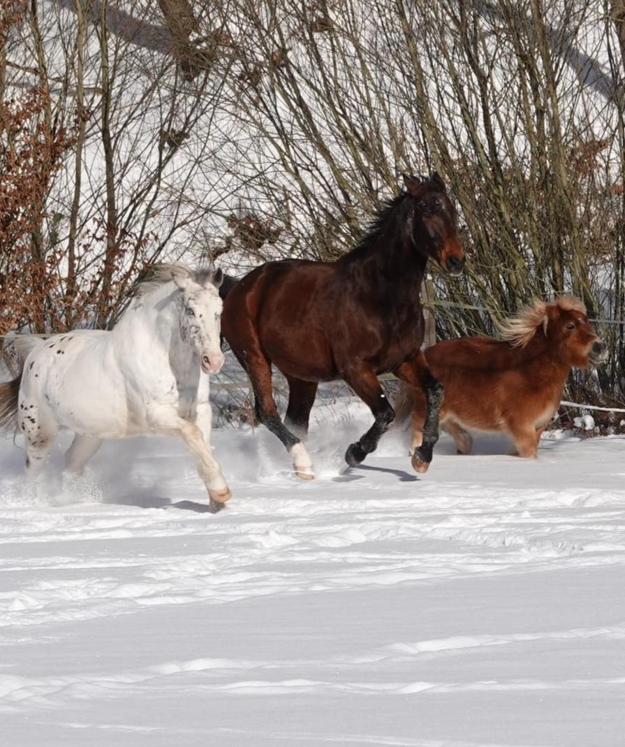 Nenterrode mit Schneeoferdchen