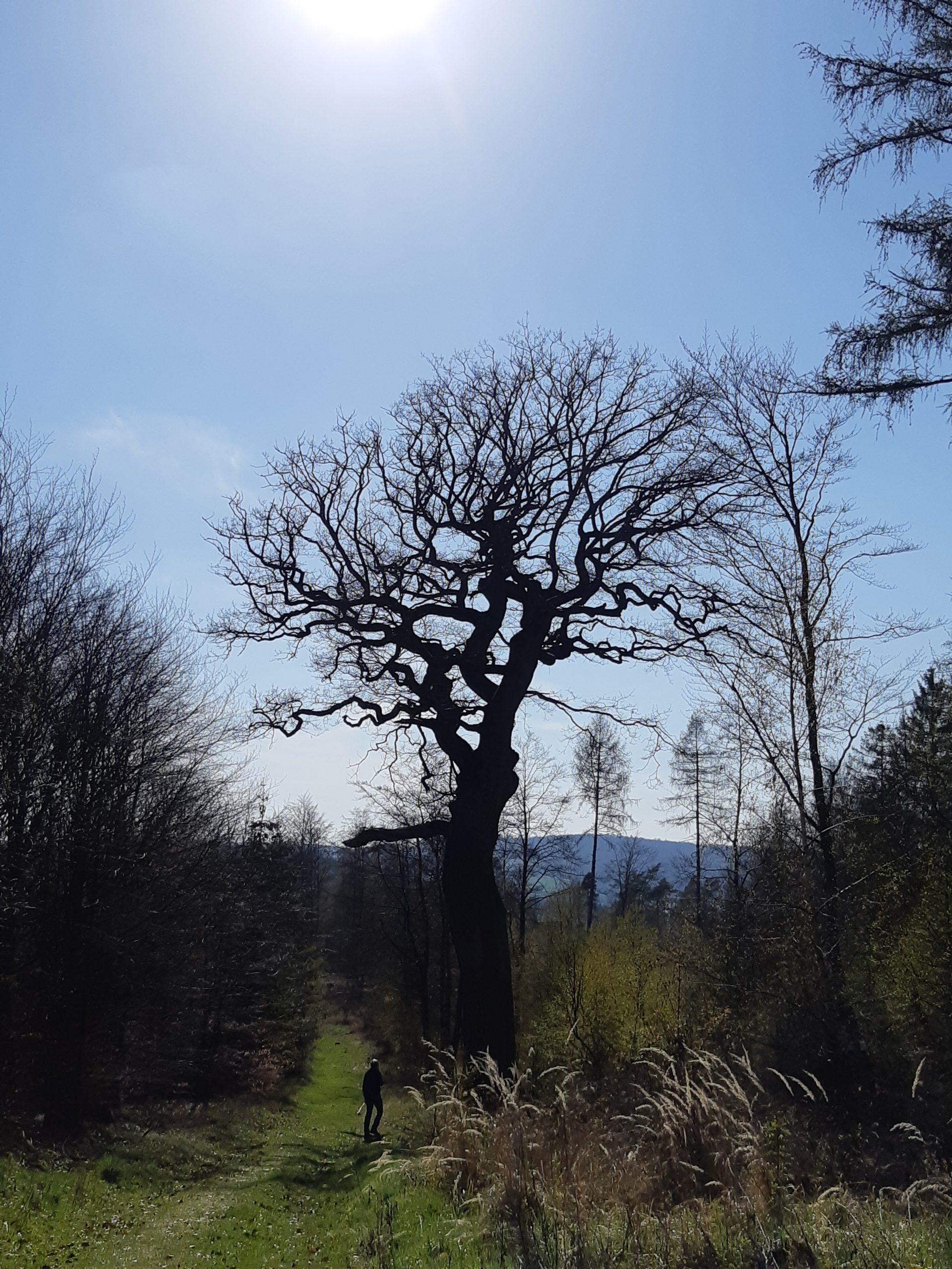 Hutewald Premiumwanderweg bei Knüllwald-Rengshausen