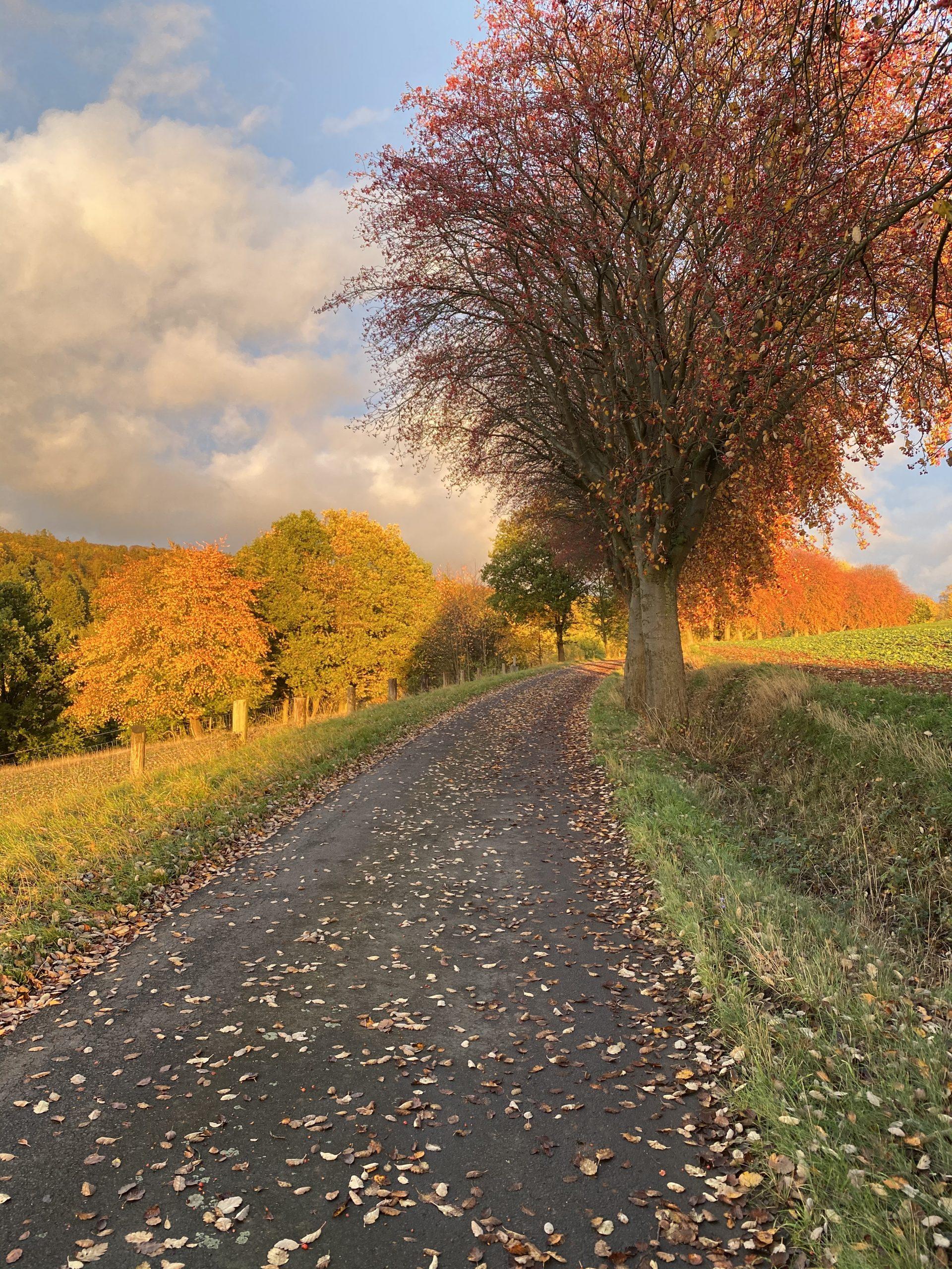 Herbstspaziergang auf dem Terrainkurwanderweg im Kneippheilbad Neukirchen/Knüll