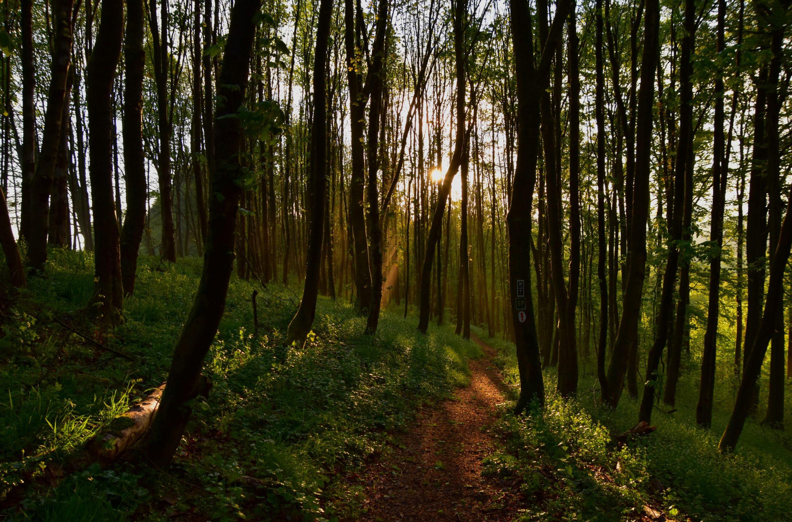 Der Eisenbergsteig durch den mit Licht durchfluteten Wald