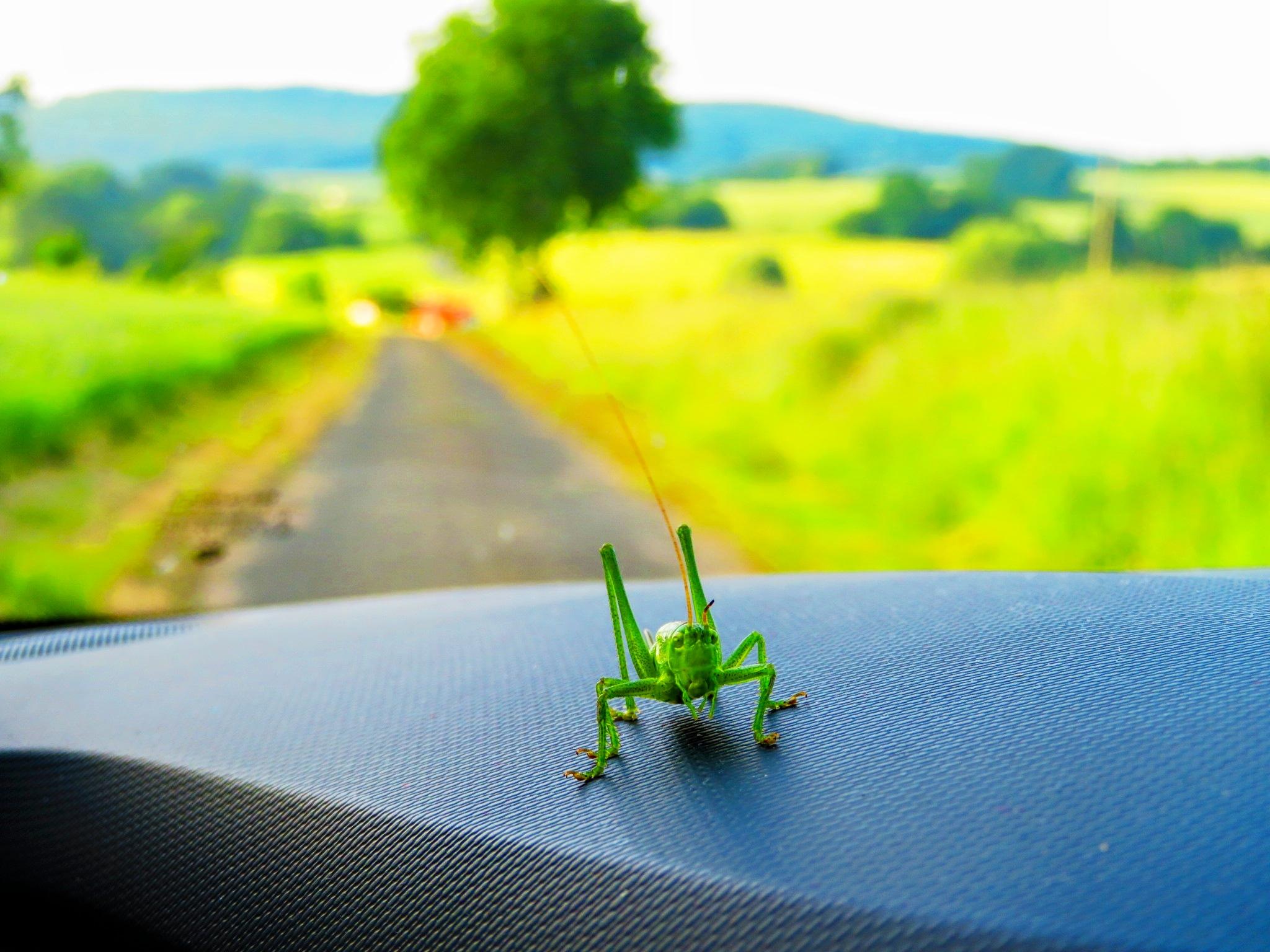 Tierischer Beifahrer