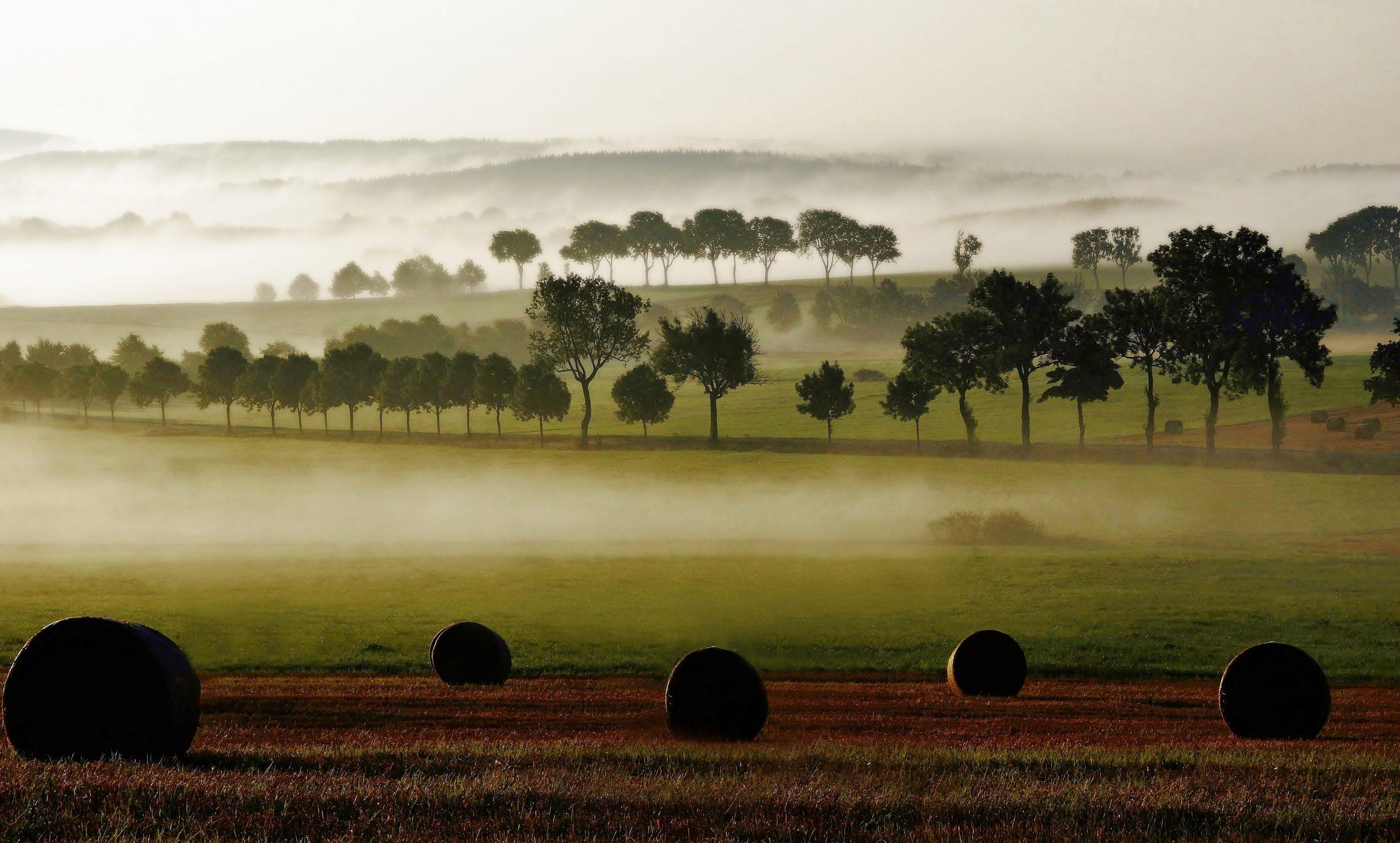 Nebel über dem Knüllwald