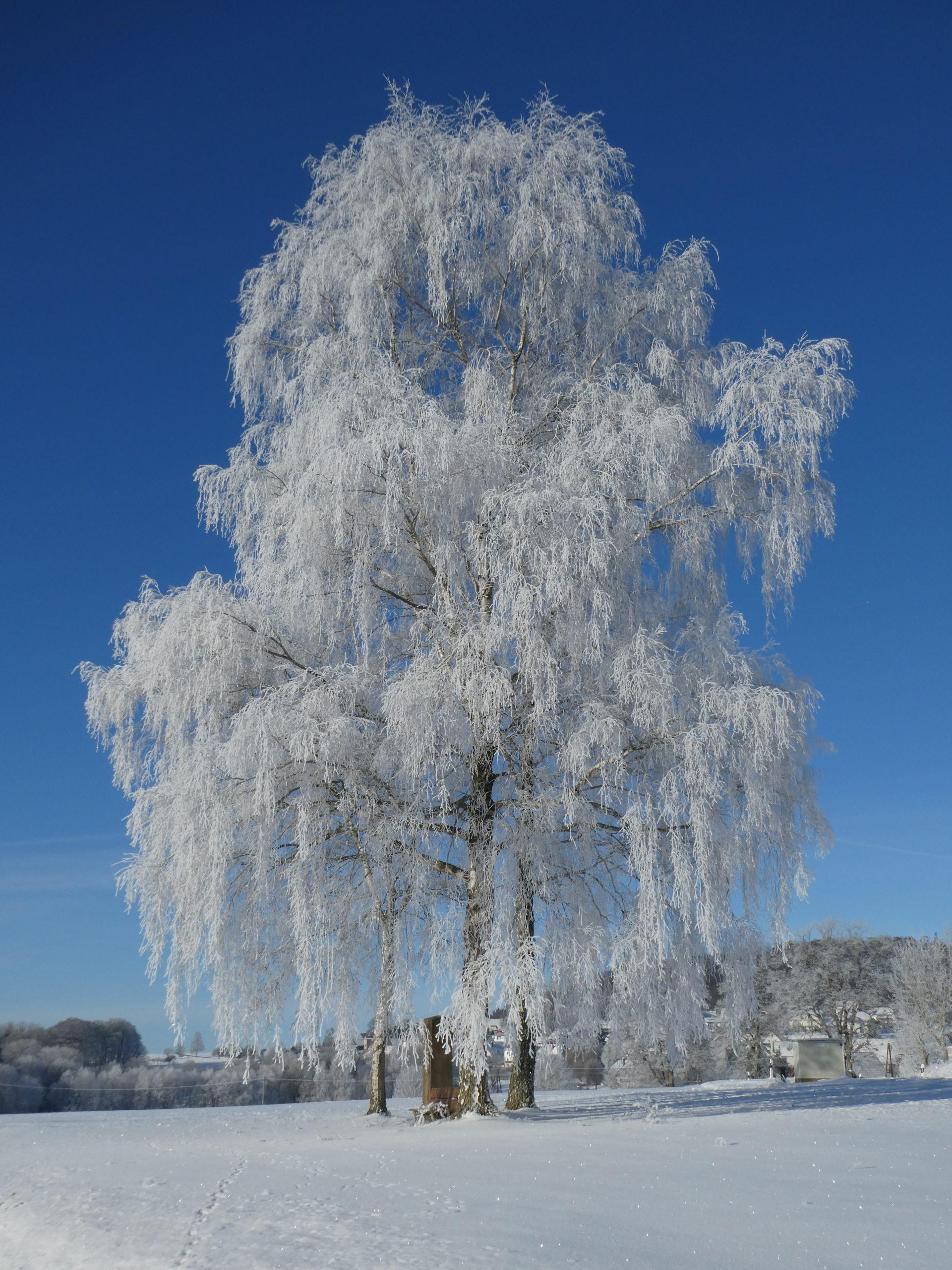 Winterimpression an der Wasserscheide Schwalm-Fulda