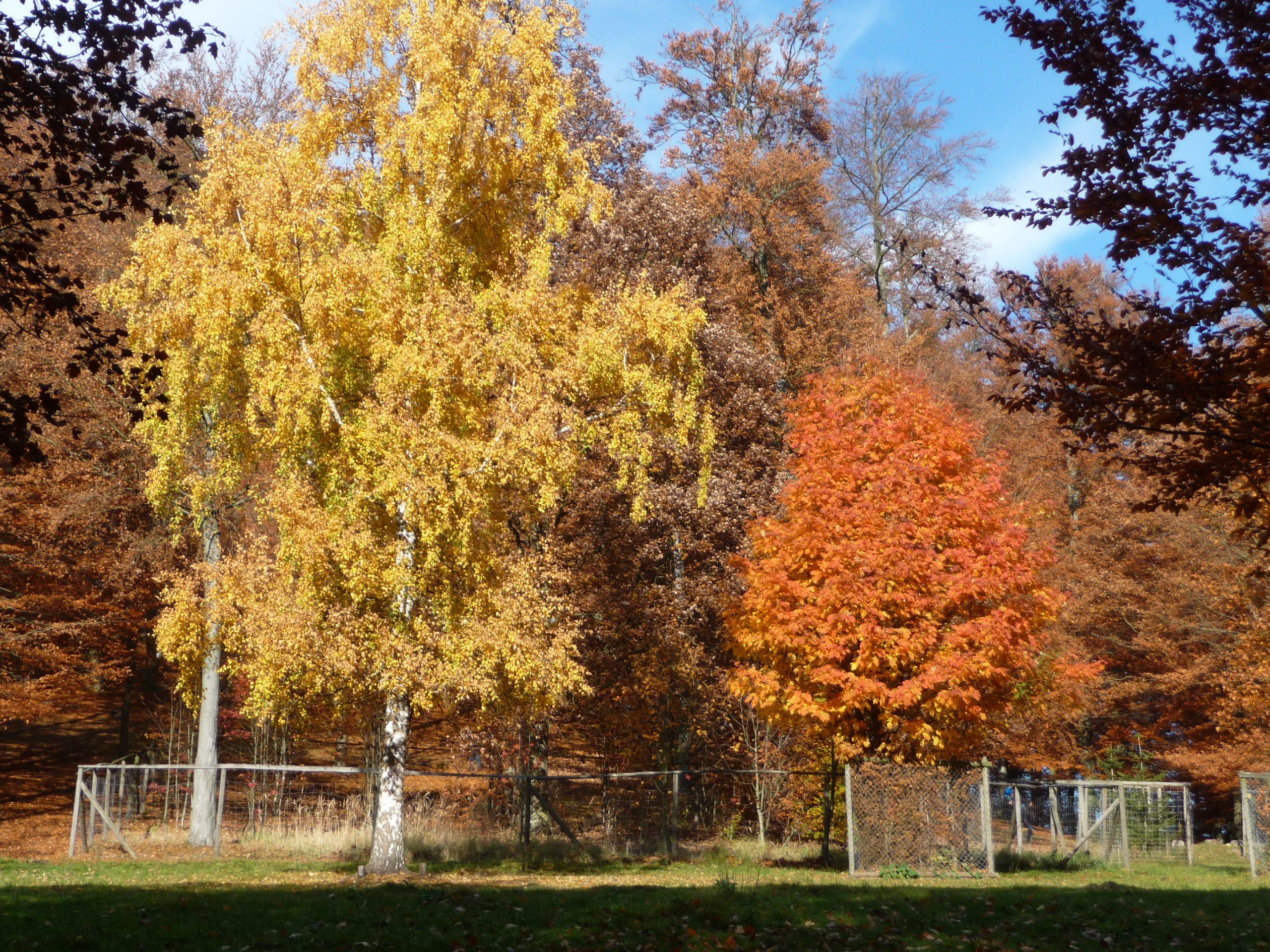 Herbst im Tierpark Knüll