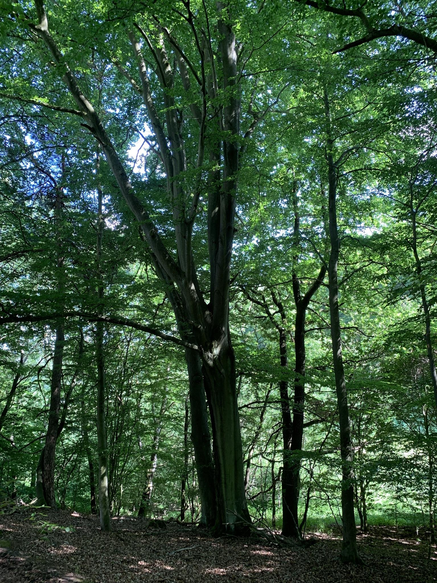 Wald bei Nenterode