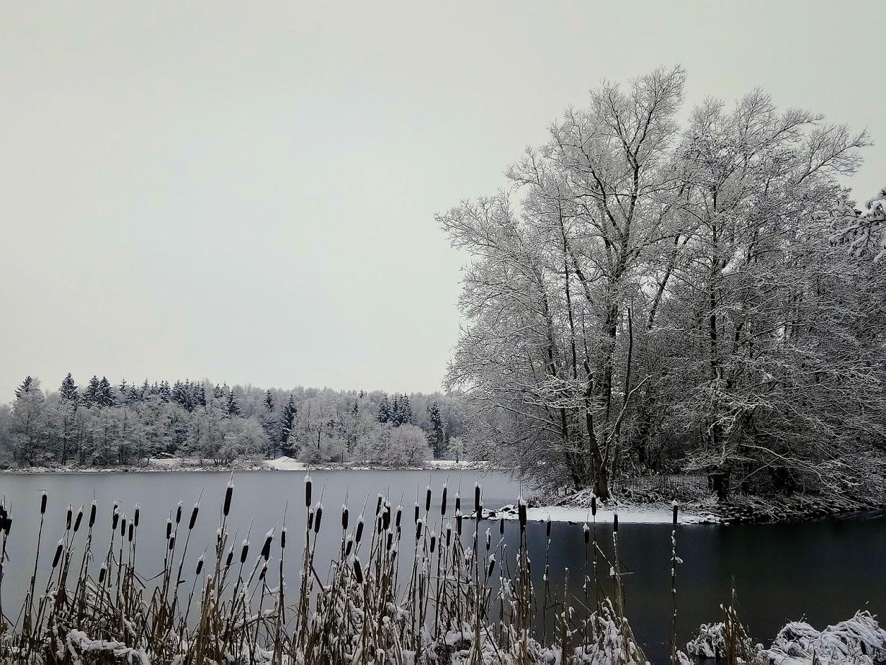 Winter am Schwarzenbörner Teich