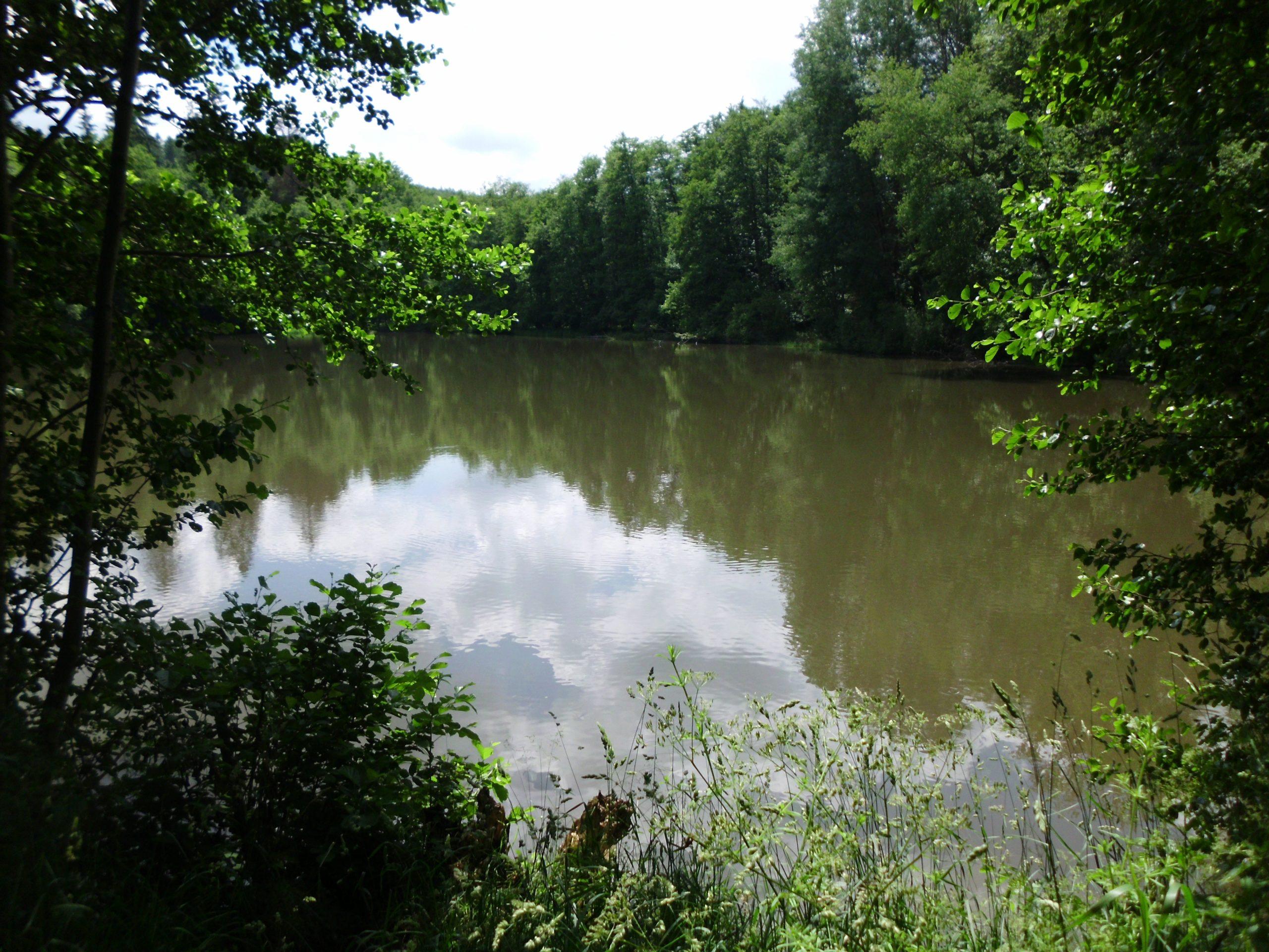 Malchusteich im Wald bei Ersrode (EndeJuni 2021)