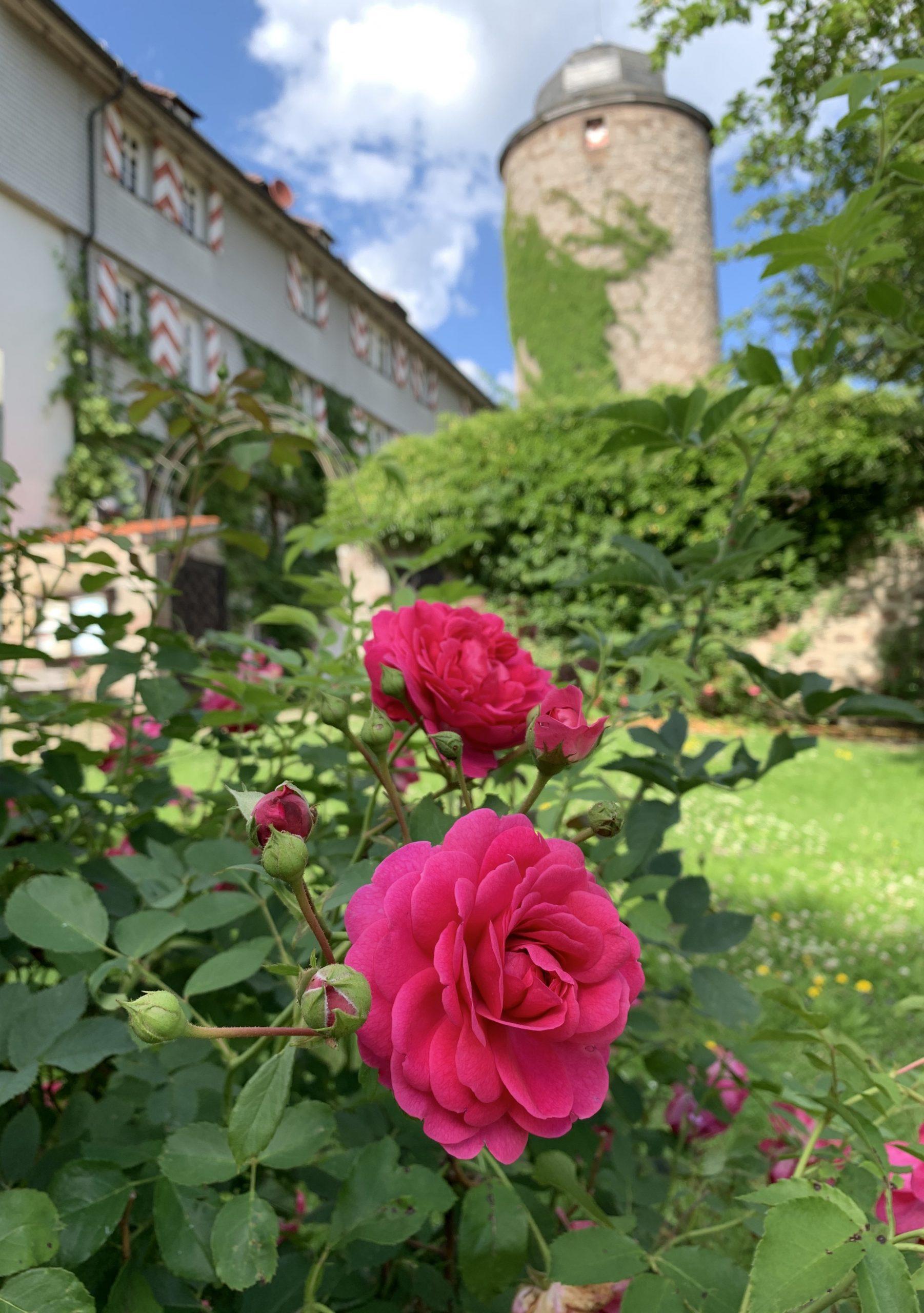 Rosenschloss Neuenstein