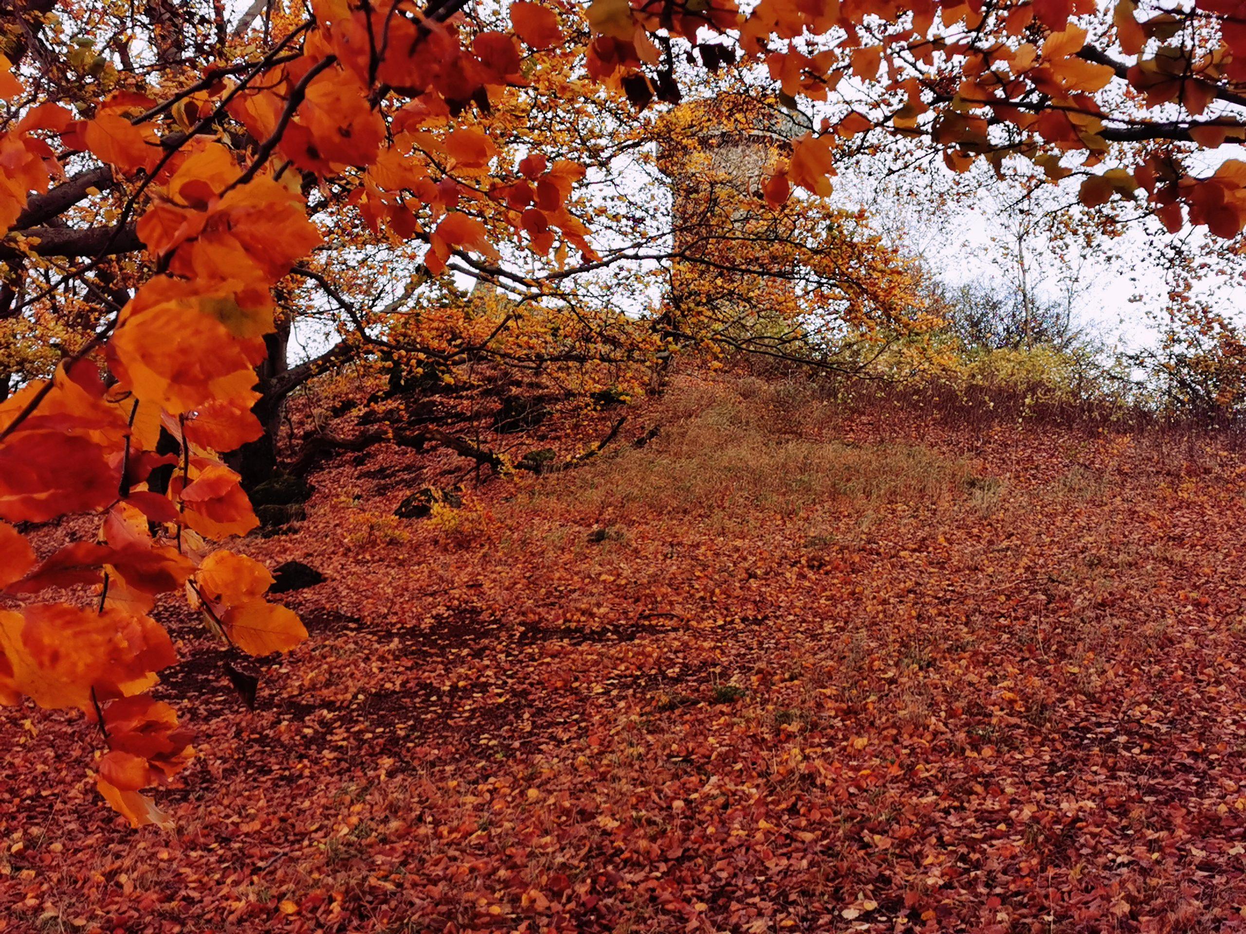 Herbst am Knüllköpfchen