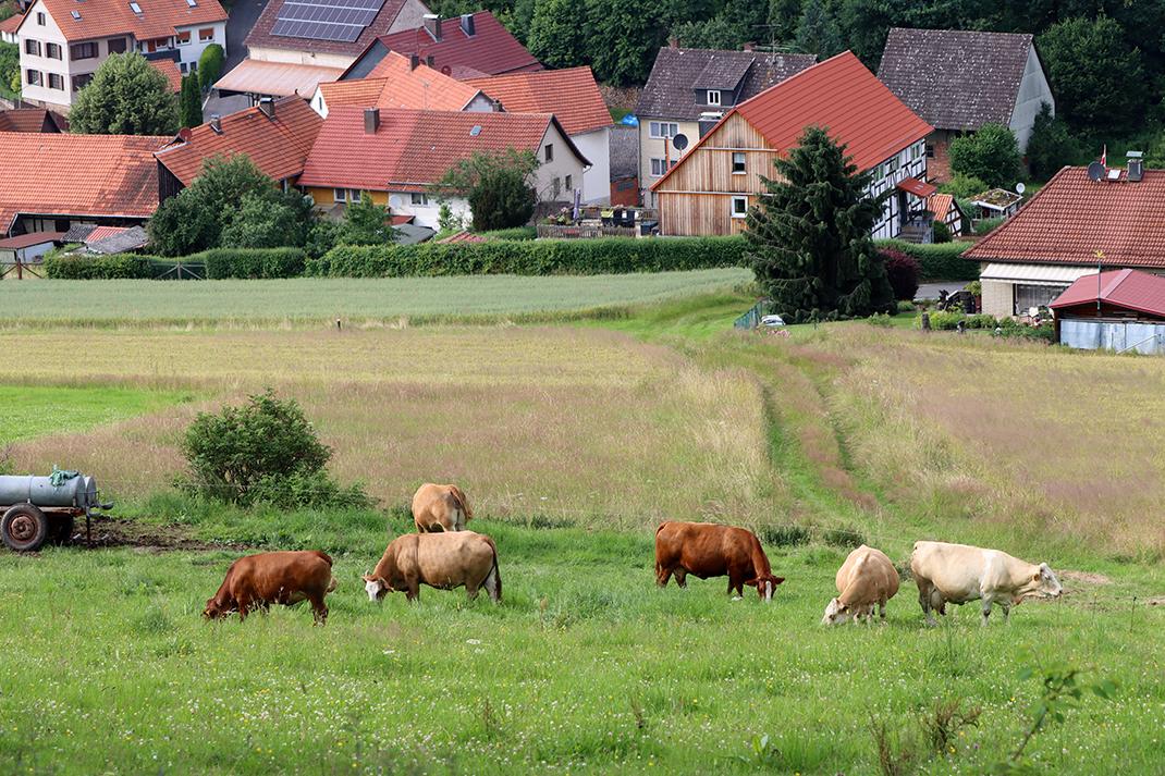 Blick über Kuhwiese auf Wallenstein